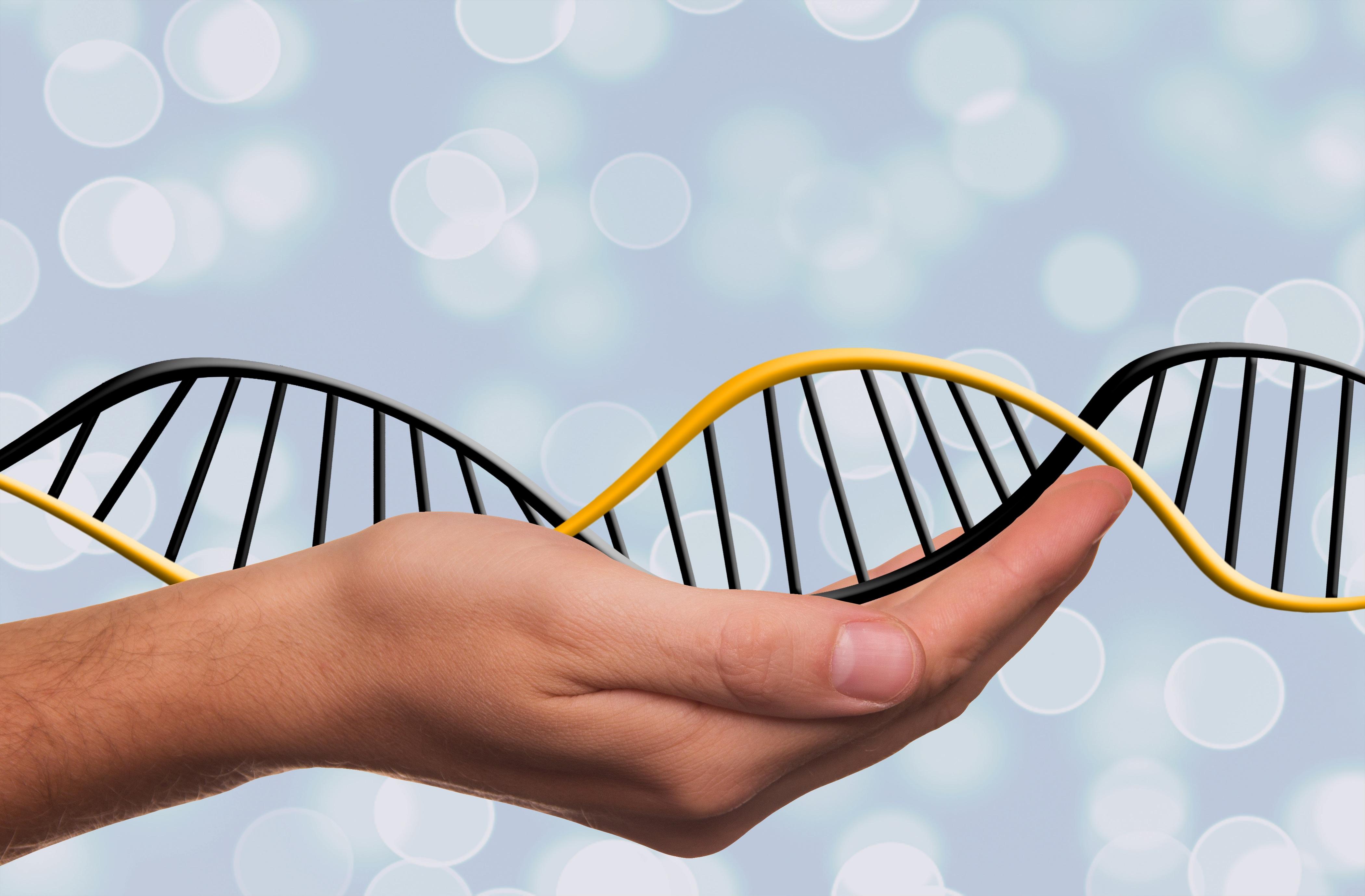 """CRISPR: """"Es pronto para la clínica; sabemos cortar, pero el pegar se nos resiste"""", Lluis Montoliú"""